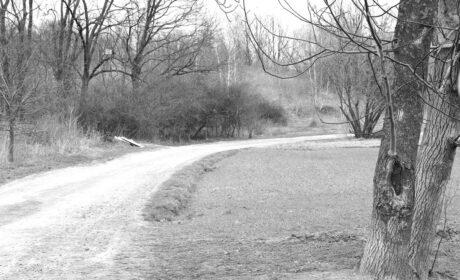 Joy Walk in the Silence (I)