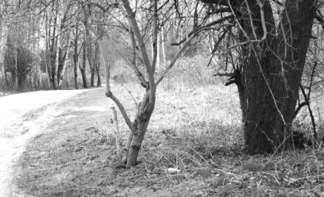 Joy Walk in the Silence (XIII)